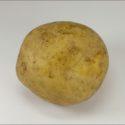 Potato_cv_dejima